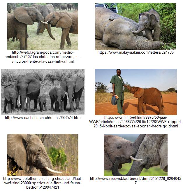 Poaching-Elephants-Vision-API-Examples