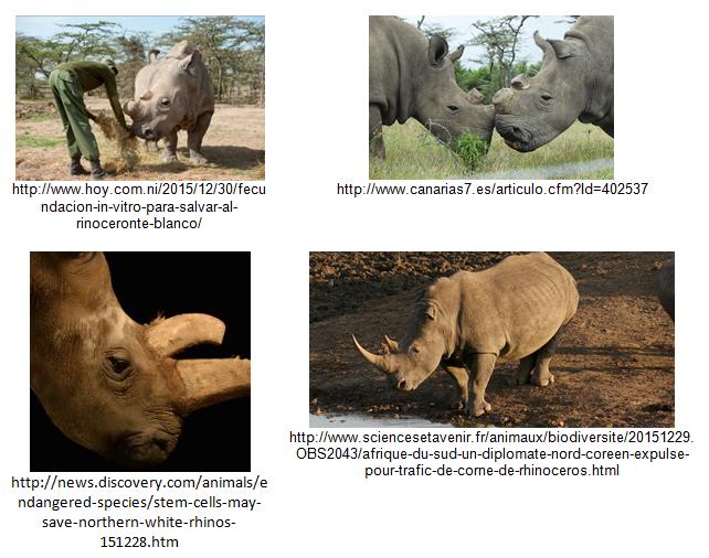Poaching-Rhinos-Vision-API-Examples